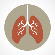 poumon 2